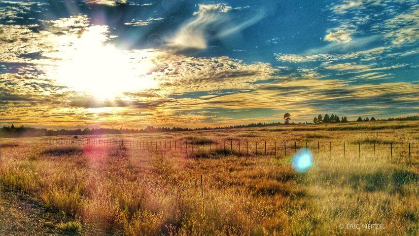 Another magical afternoon in the White Mountains of Eastern Arizona #whitemountains #arizona #visitarizona #fallcolors #forestservice #apachesitgreavesnationalforest #abc15 @arizonahighways