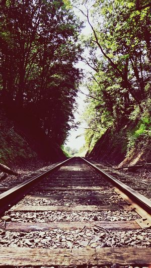 Now you have something to follow... Railroad Tracks Pathway Through Trees Color