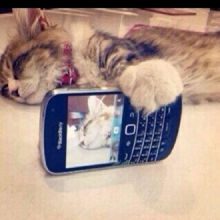 Nice one cat *~*
