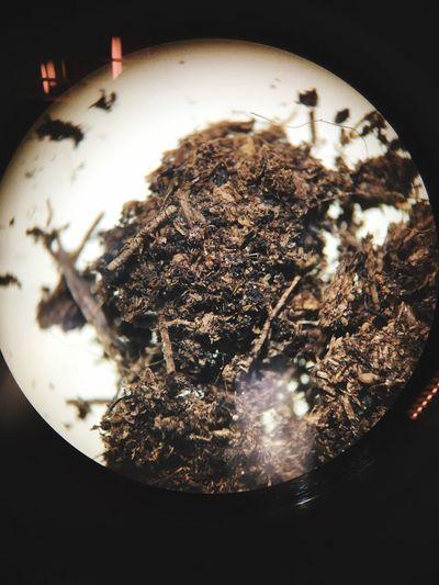 Peat Moss Planting Media Composed