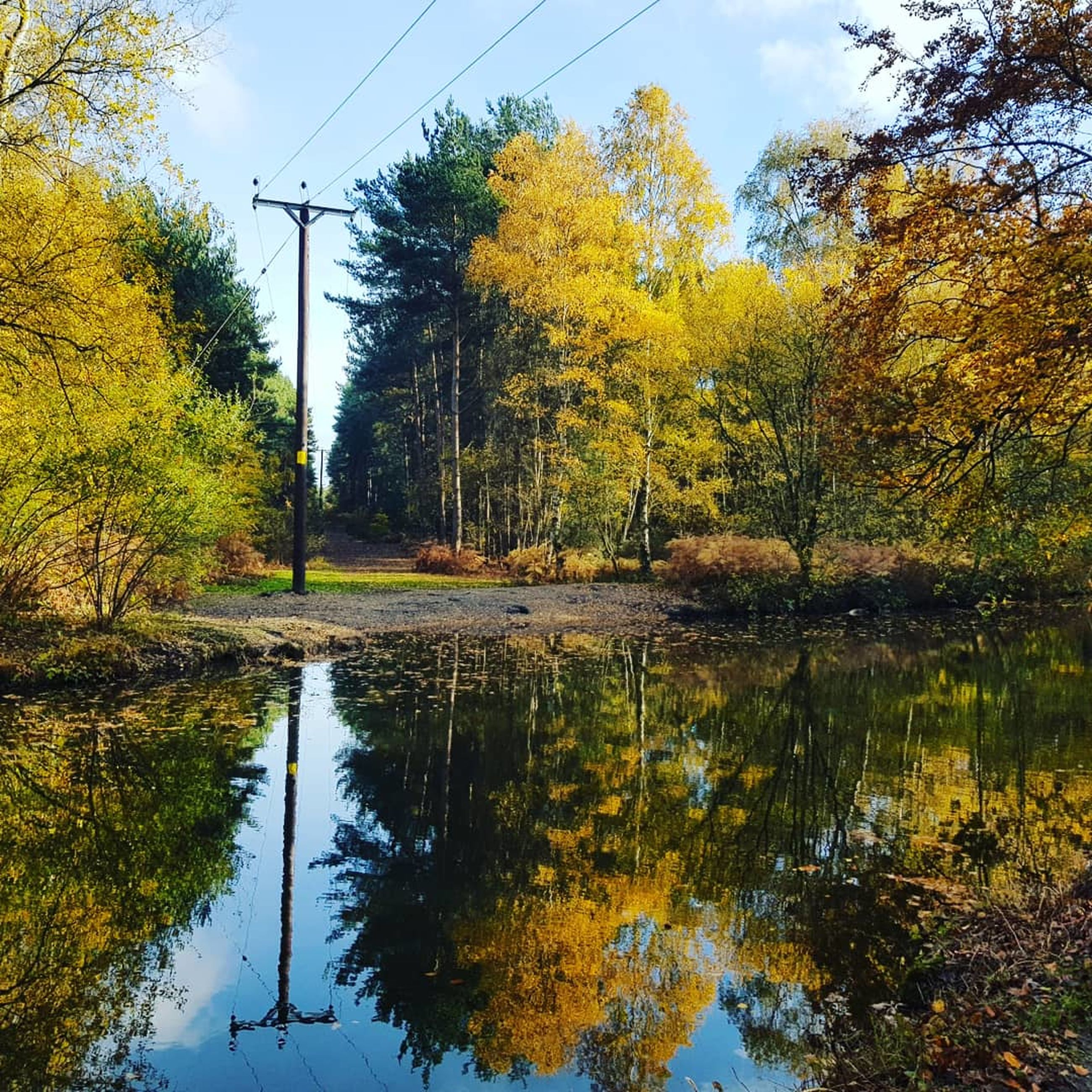 tree, plant, reflection, nature, water, sky, lake, tranquility, scenics - nature, beauty in nature, tranquil scene, no people, autumn, day, electricity, change, cable, technology, growth, outdoors, power supply