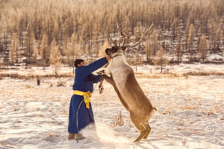 Man standing with reindeer on snow