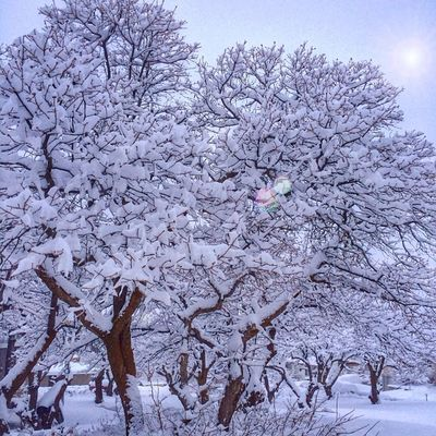 Let it be Snow Beautiful Winter Utah utahgram ig_utah ig_northamerica awesome cold trees