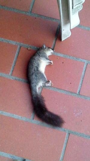 Cat Kill Killer Cat Prey Animal Preda Predatorhunting