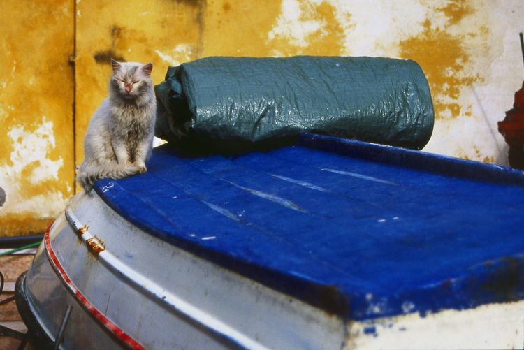 Stray cat sitting on upside down boat against yellow wall