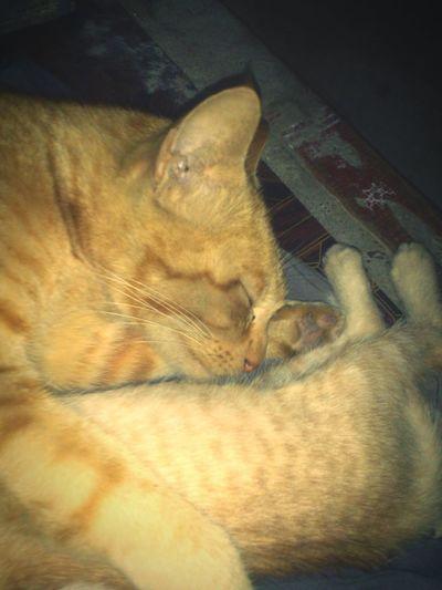 Pet Photography  Cat♡ Memories Love♡ . ..