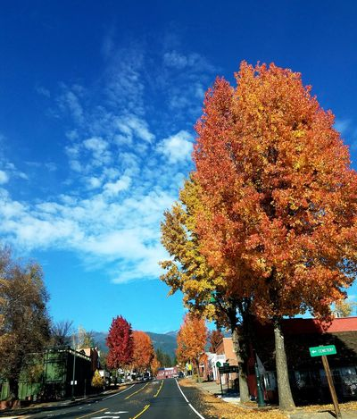 The Drive Weaverville Tree Sky Blue Day California Small Town Fall Leaves Cruzing Outdoors Cruising Beautiful Day Colors Of Autumn The Ville Neighborhood Map