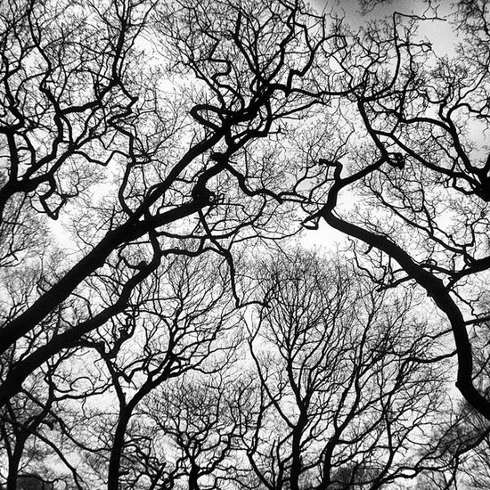 K8marieuk Trees Forest Wood Woods Timber Branches Nature Mono Monochrome Iphoneonly Photo365 Photooftheday Igers IGDaily Instagrammers Silhouette Nottinghamshire Sherwood Sherwoodforest