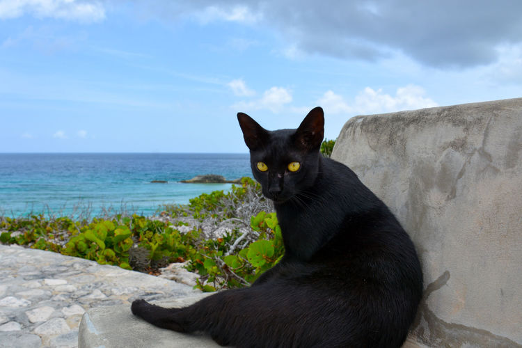 Portrait Of Black Cat Sitting By Sea Against Sky