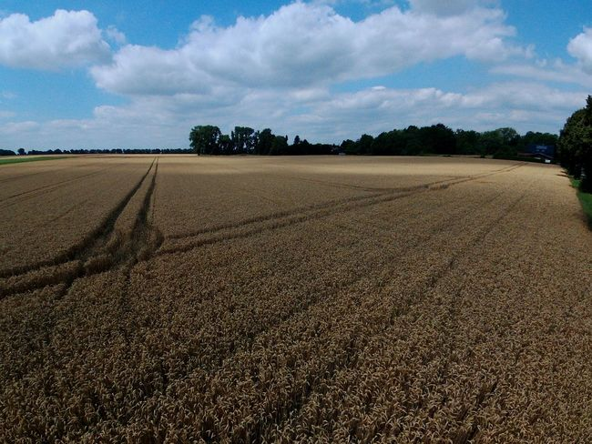 An einem mittelwarmen Sommertag Cloud - Sky Agriculture Landscape Field Rural Scene Sky Day Tranquility Beauty In Nature Summer Outdoors Tree No People Nature Food Freshness Sommergefühle Let's Go. Together. Nature Shadow EyeEm Selects Madmen-kollektiv.org EyeEm Overview Droneshot