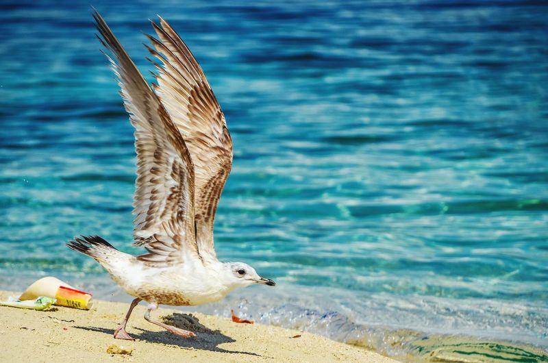 Bird flying at beach