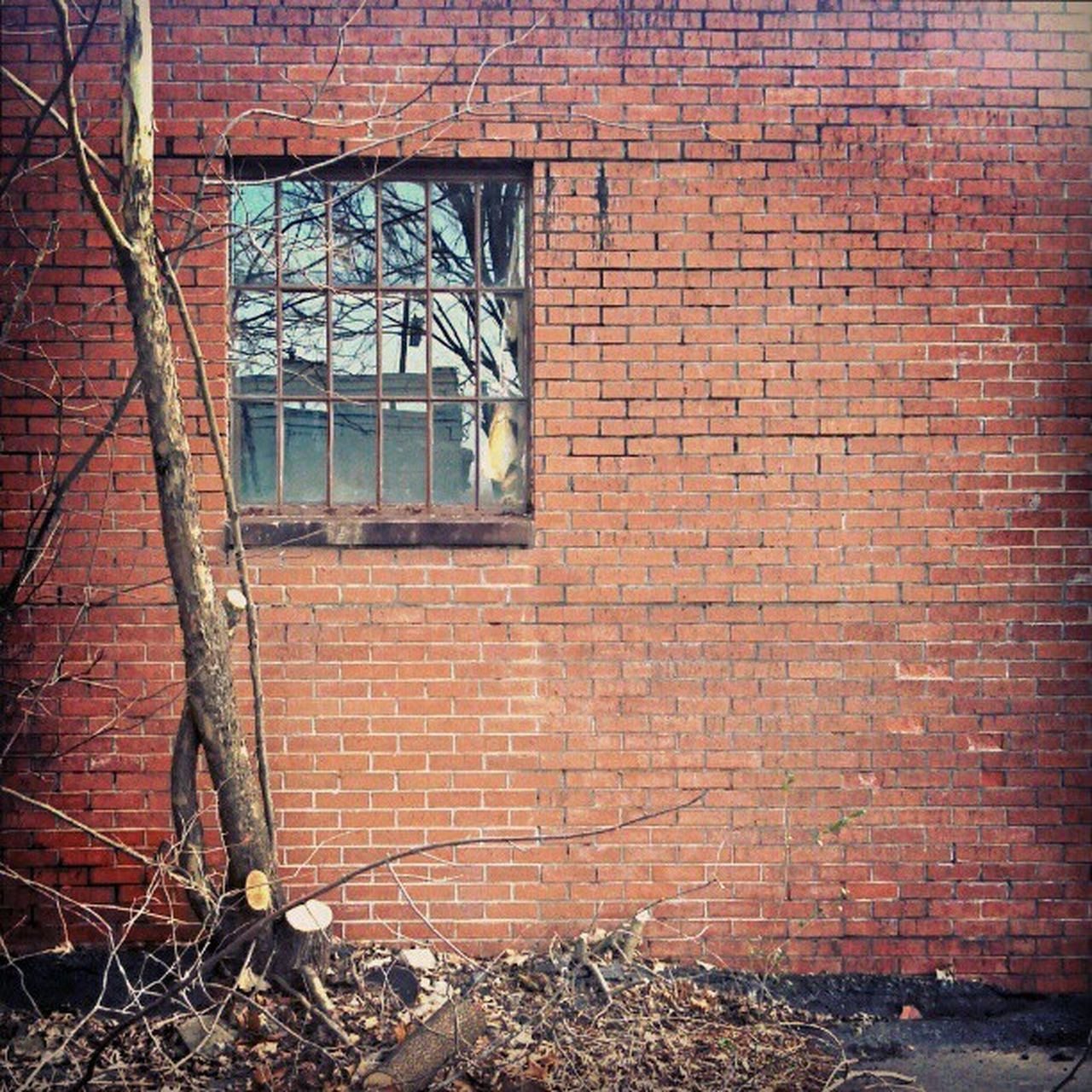 architecture, built structure, brick wall, building exterior, abandoned, weathered, no people, day, damaged, window, outdoors, run-down, plant, bad condition, ivy, bare tree, rotting, desolate