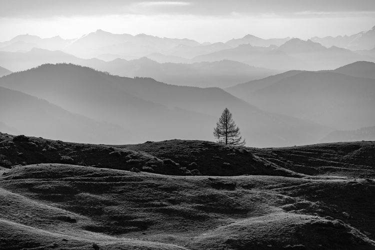 Single tree with layers of mountains in the background, fall colors, filzmoos, salzburg, austria.