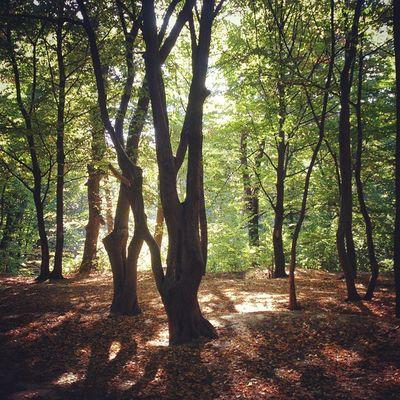 Бодрый утр! сырец Лес утро Syrets morning forest nature природа