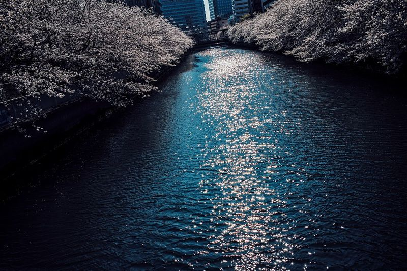 Cherrys. Tokyo Tokyo,Japan City Life Riverside Cherry Blossoms Cherry Blossom Water High Angle View Nature No People Day Pattern Illuminated Outdoors Sunlight Reflection Waterfront