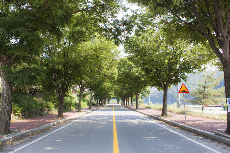 Tree Road Sign Direction Plant The Way Forward Symbol Day Nature No People Diminishing Perspective Green Color Outdoors vanishing point Road Sign Treelined