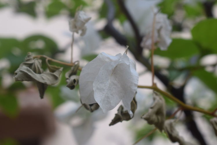 Flower Nature No People Day Close-up Tree Leaf Plant Beauty In Nature Fragility Outdoors Growth Branch Flower Head