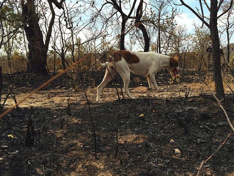 Cerrado queimado. Animal Themes Tree Queimada Cerrado Goiás State Goias Burning EyeEmNewHere