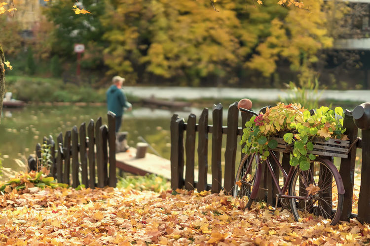 Old wooden fence, bike among the fallen autumn leaves on the shore near the water. Fisherman with a fishing rod. Atmospheric landscape, relax, nostalgia, seasonal mood concept Autumn Nature Leaf Day Tree Focus On Foreground Men Outdoors Lifestyles Leisure Activity Land Falling Park Fishing Bicycle Relaxation Relax Season  Seasonal Mood Landscape Wooden Angler Fall Autumn