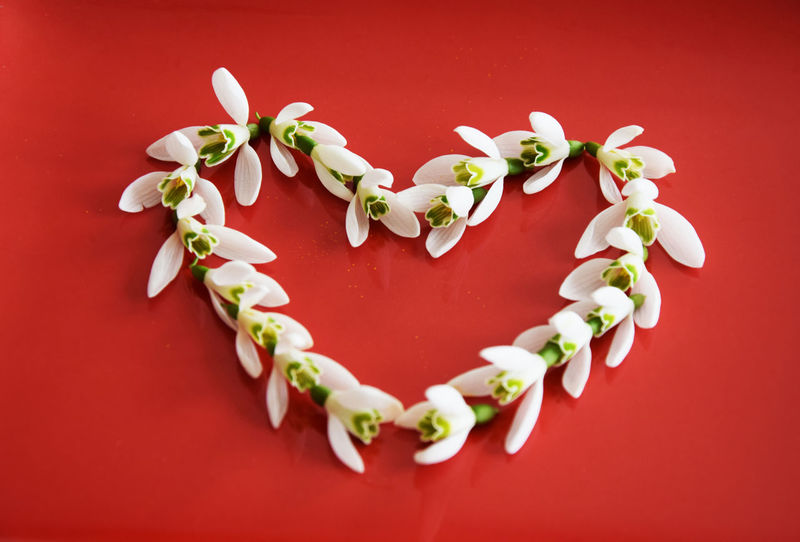 Snowdrops flowers in heart shape on red background. Snowdrops is the first flowers blooming in spring Spring Flowers Spring Season  Greetings Friendship Red Background December February Green Color January Love Nature Valentine's Day  Blooming Close-up Day Decoration First Flowers Of Spring Flowers Garden Green Background Heart Shape Le Perce Neige Naturelovers Petals Snowdrop Studio Shot White White Flower ดอกหยาดหิมะ