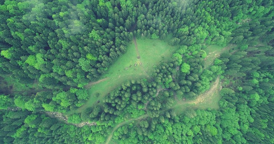 Aerial Photography Picea Abies River Aerial View Summer Exploratorium Summer Exploratorium Forest Photography Nature Photography EyeEmNewHere EyeEm Wind Power Aerial Shot Tree Backgrounds Full Frame High Angle View Rural Scene Close-up Green Color Grass Growing Green Countryside