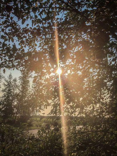 Beautiful Sun 🍂☀️ Sun Tree Perspectives On Nature
