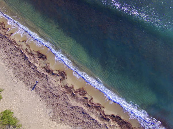 Posidonia Seaweed On The Beach After The Storm Aerial Photography Nature Beach Beach Of The Costa Daurada-Tarragona Beauty In Nature Day Droneshot Motion Nature No People Outdoors Photography With A Drone Sand Scenics Sea Vertical Photography Water Wave