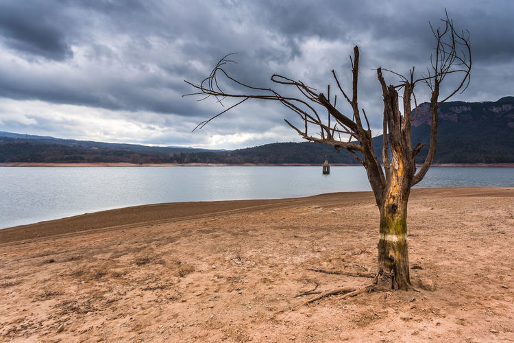 Arid Climate Beauty In Nature Dead Tree Landscape Mountain Nature No People Sand Scenics Tranquil Scene Tranquility Water