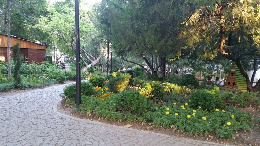 Park Park - Man Made Space Urban Nature Trees Summertime Relaxing Hanging Out Green Weekend Weekend In The City Afternoon Outdoor Cobblestone