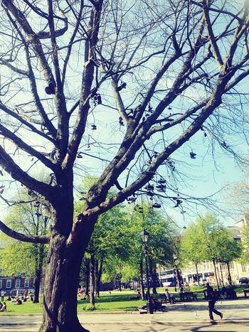 Shoes Trees Green Interesting The Human Condition Bristol England Park Taking Photos Living Bold