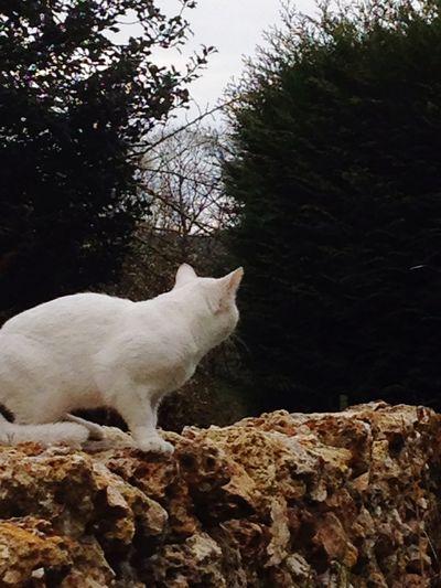 Savage white cat in my garden Cat Savage Garden Animals Animal Cat Lovers White Cat Beautiful Nature Cats