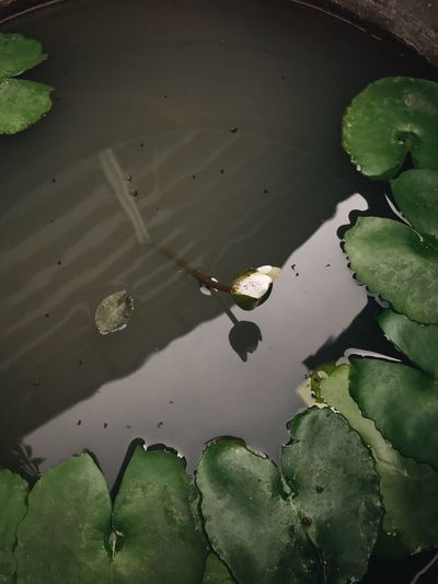 High angle view of water lily floating on lake