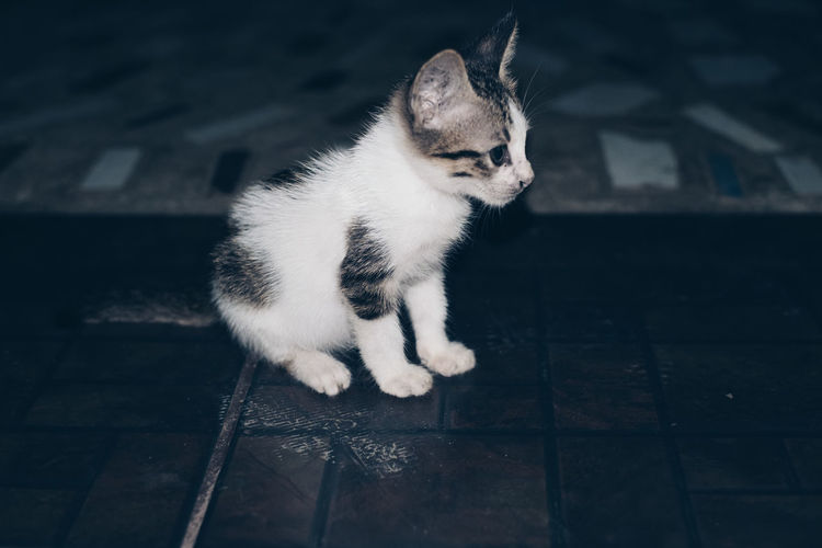 High Angle View Of Kitten On Footpath At Night