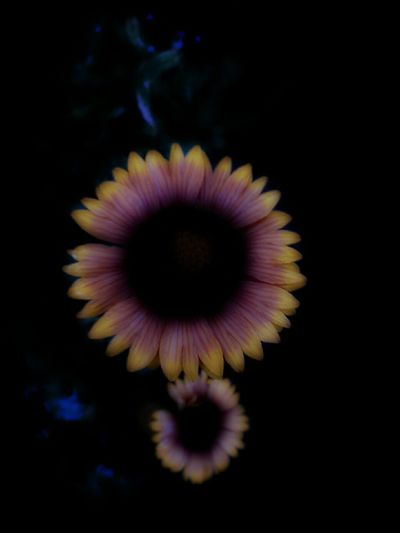 Midnight In The Garden Of Good And Evil Luminous Flowers Glow Dusk