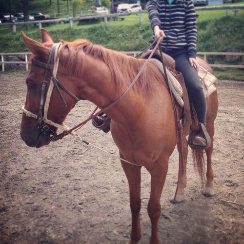 Farm Horses Riding Running 乗馬4年目*\(^o^)/*