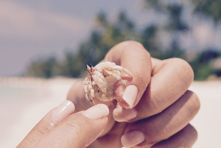 Cropped image of hand holding hermit crab at beach against sky