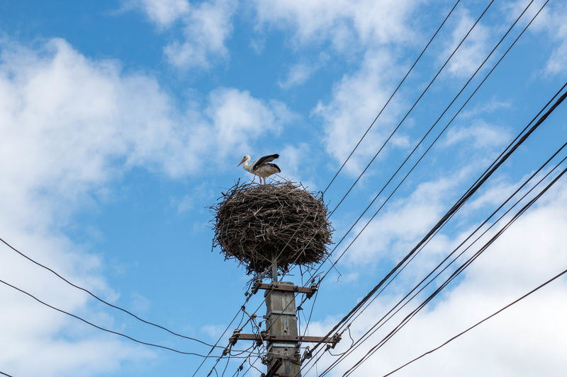 Animal Nest Animal Themes Animal Wildlife Animals In The Wild Bird Bird Nest Cable Cloud - Sky Connection Day Electricity Pylon Low Angle View Nature No People One Animal Outdoors Perching Power Line  Power Supply Sky Stork White Stork