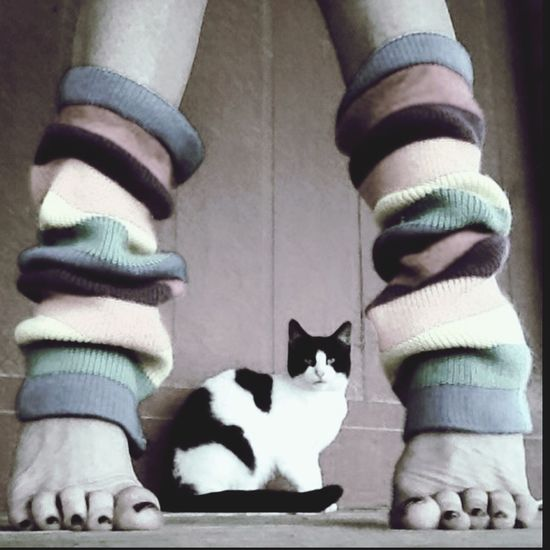 Legwarmers Black And White Black & White Black And White With A Splash Of Colour Feline Legs Feet Domestic Cat Cats Of EyeEm BW_photography Footselfie Human Body Part Bw_lover Low Section Bw_ Collection Bw_cats Barefoot Footfetish Human Leg Day Pets Domestic Animals Close-up DevineTx Blackandwhite Photography