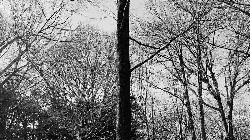 Tree B/w ใบไม้ร่วง Tree