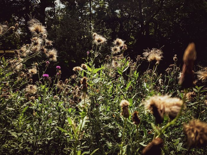 In the Field,