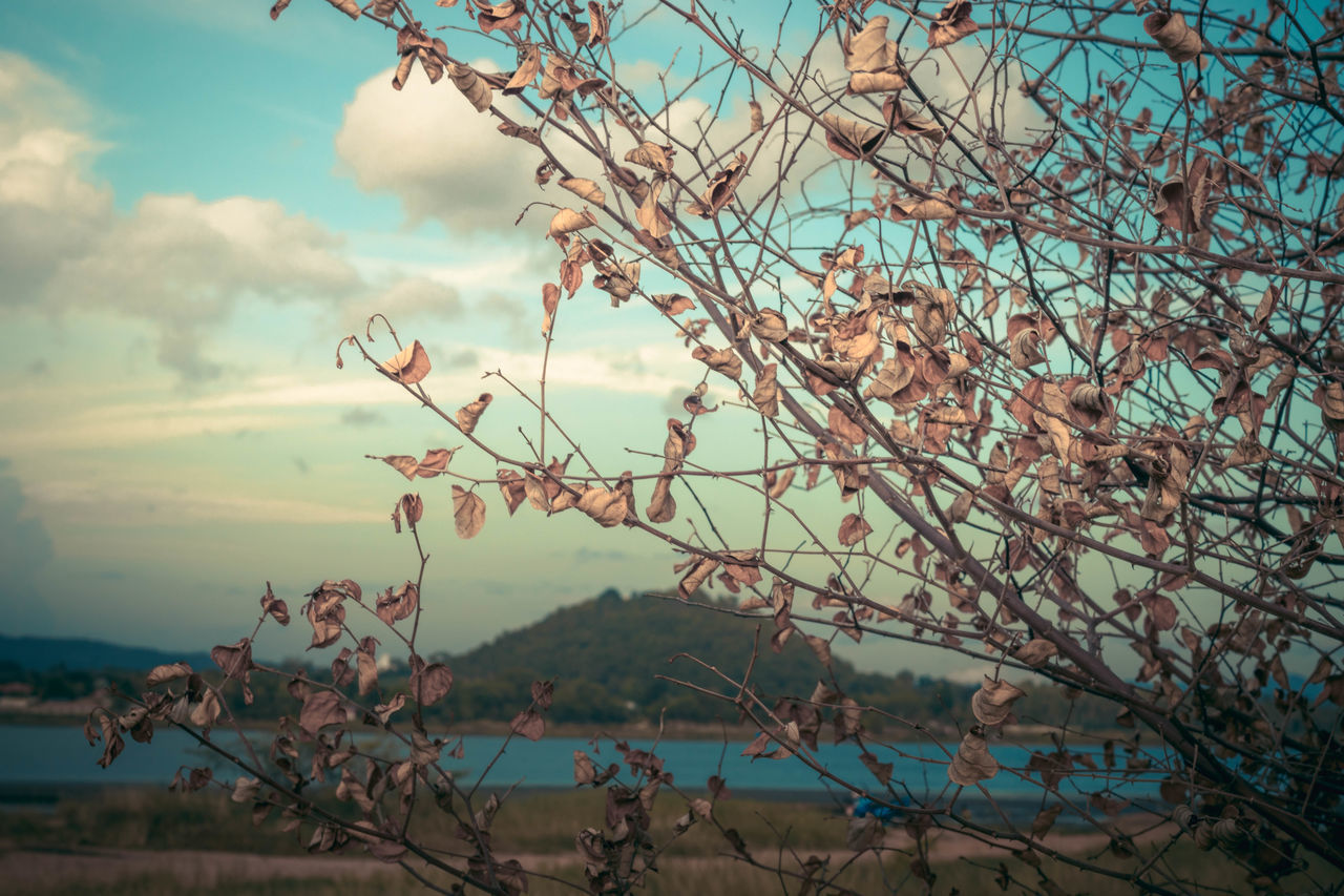 sky, beauty in nature, plant, tree, tranquility, nature, branch, cloud - sky, tranquil scene, water, no people, day, scenics - nature, growth, outdoors, focus on foreground, flowering plant, flower, fragility, cherry blossom