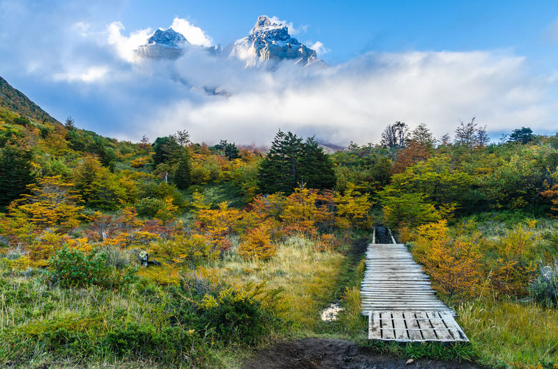 Scenic view on the Torres del Paine trek Autumn Backpack Beauty In Nature Chile Dramatic Forest Glacier Hiking Lake Mountain Mountains Nature Outdoors Patagonia Path Peak Rock Scenics Sky Torres Del Paine Trekking Water