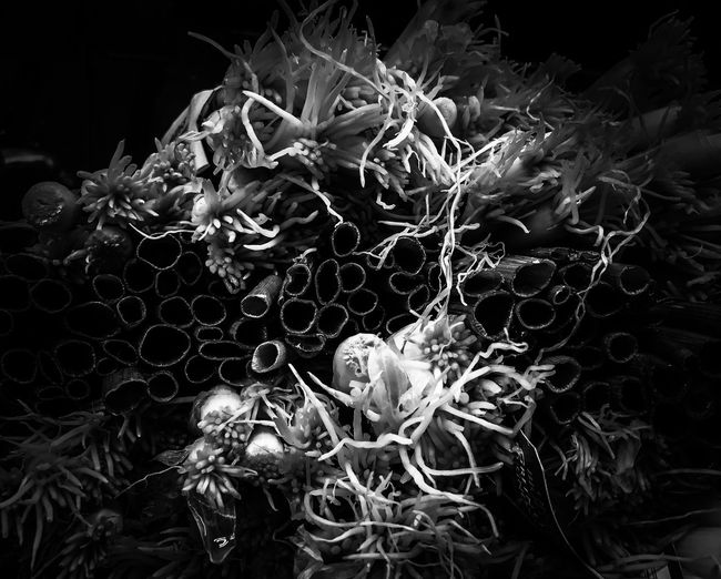 Bunches of Spring Onions in Black & White on Market Day Black Background Close-up Plant Artistic Photo Abstract Photography Black And White Dramatic Edit Dramatic Dark Vegetables Spring Onion Scallions Contrast Farmers Market Produce Strange Roots Plant Root