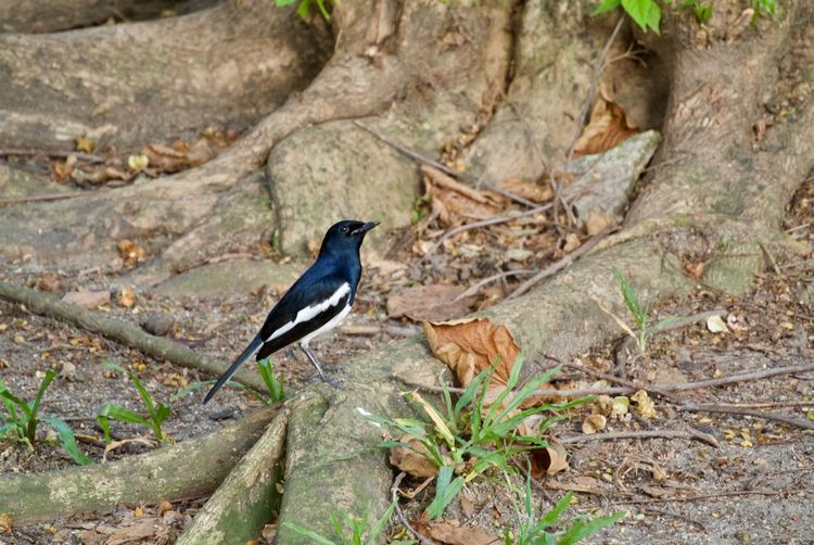 Animal Themes Animal Wildlife Animal Animals In The Wild One Animal Bird Vertebrate Perching Plant Focus On Foreground Day No People Nature Tree Land Solid Outdoors Full Length Rock - Object Rock Robin Bird
