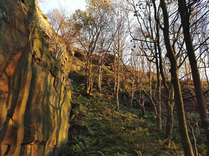 Nature Growth Tree Outdoors Day No People Beauty In Nature Low Angle View Sky Freshness Stone Rocks Light And Shadow Textures And Surfaces Heptonstall Hell Hole Rocks Landscape Quarry Climbing Hell Hole Autumn Rough Weathered Beauty In Nature Nature