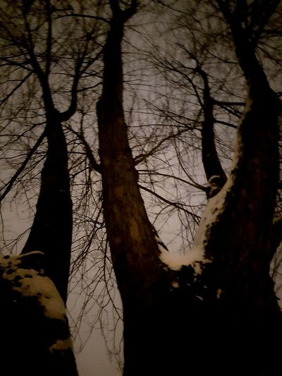 Bare Trees Cold Temperature Night Tree Branch Shadow Tree Trunk