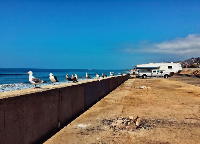 Seagulls perching on beach by sea against sky