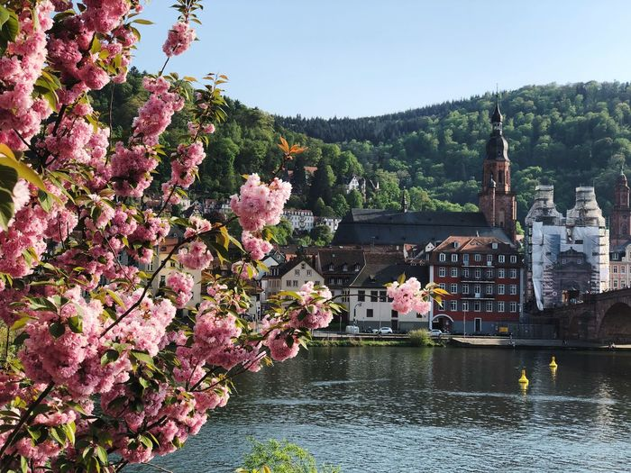 Pink Flowering Tree By River Against Sky