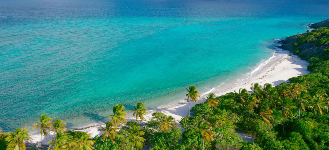 Aerial view of trees by beach