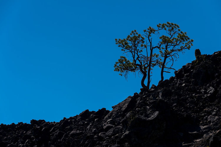 Trees growing out of volcanic rock Earth Beauty In Nature Blue Clear Sky Copy Space Day Geological Formation Geology Growth Lava Field Lava Rocks Low Angle View Mountain Mountain Peak Nature New Growth No People Outdoors Plant Rock Rock - Object Scenics - Nature Silhouette Sky Solid Tranquil Scene Tranquility Tree Volcanic Landscape Volcanic Rock